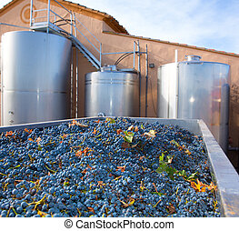 Cabernet sauvignon winemaking with grapes and tanks -...