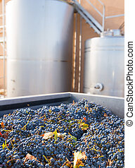 cabernet sauvignon vinemaking with grapes and tanks -...