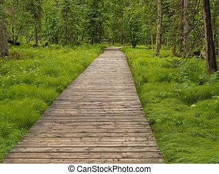Boreal, bosque, Taiga, boardwalk, norteño, AC, Canadá