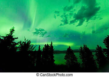Intense green northern lights over boreal forest - Intense...