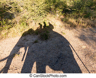 Elephant safari at Victoria Falls in Zambia - Shadow of...