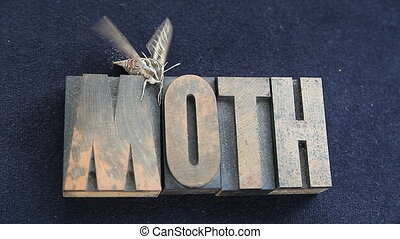 sphinx moth on old wood type word - newly out of its cocoon,...
