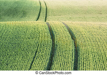 field with green crop