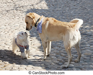 First meeting - Dogs sniffing each other on a first meeting.