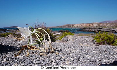 White flower in rocky ground