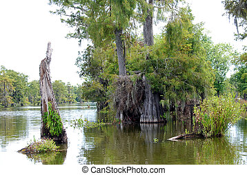 Swamp Bayou in Louisiana - Trees in a Swamp in Louisiana