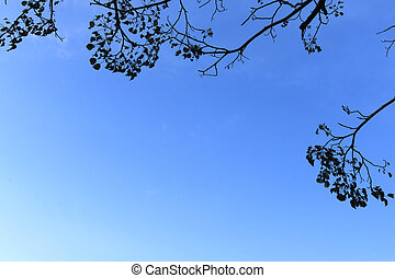 Tree branches framing blue sky