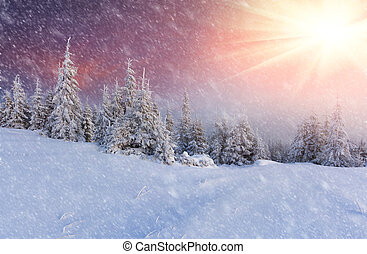 Snowstorm in the mountain forest. Colorful winter morning.