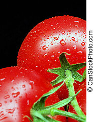 Tomatoes on Vine - Two ripe tomatoes on vine covered in...