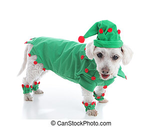 Santa's Elf or a jester in green suit and hat - Pet dog...
