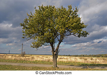 thunderclouds are above a be single tree