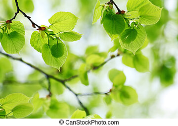 fresh green leaves in sunny day