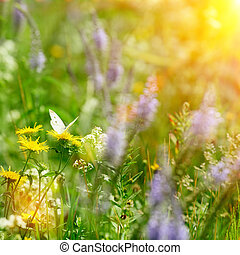 butterfly on field flowers and sun light at summer day