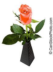 Pink rose in black vase