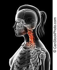 Highlighted cervical spine - 3d rendered illustration of the...