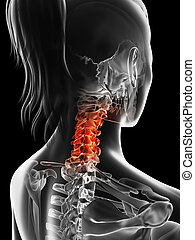Highlighted cervical spine - 3d rendered illustration of the...