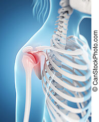 Highlighted shoulder joint - 3d rendered illustration of a...
