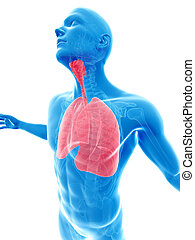Highlighted lung - 3d rendered illustration of a male posing...
