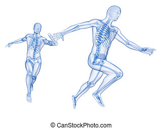 Relay - visible skeleton - 3d rendered illustration of a...