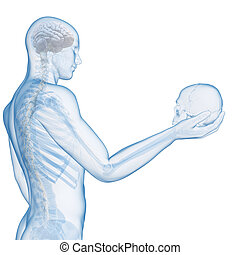 Visible skeleton - 3d rendered illustration of a guy holding...