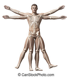 Vitruvian man - skeleton - 3d rendered illustration of a...