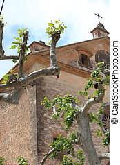 Sprouting trees in a church garden