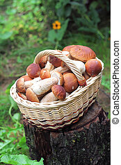 Basket with ceps