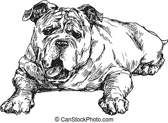hand drawn english bulldog illustration