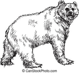hand drawn bear illustration