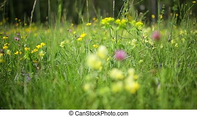 Countryside flowers - View of Countryside flowers