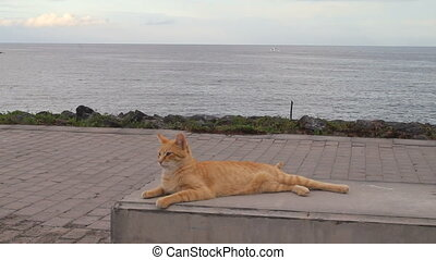 A lazy cat relaxing on a stone bench