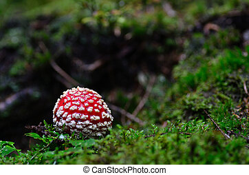 small fly agaric in moss and forest