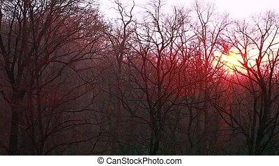 Rain on trees at sunset