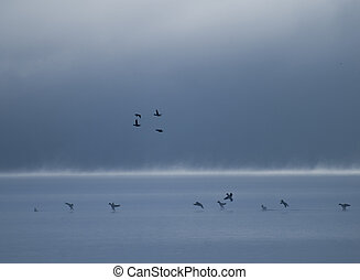 Ducks Landing at Dusk - Ducks landing at dusk on a fog...