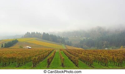 Dundee Oregon Vineyards 1080p - Dundee Oregon Vineyards on...