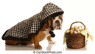 バスケット, イースター, 犬