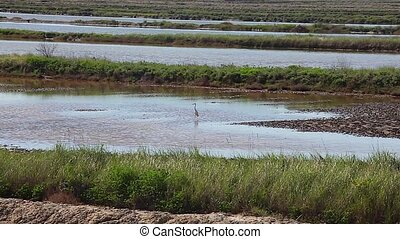 Heron - View of heron in the Salt evaporation ponds in...