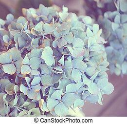 Dreamy image of Hydrangea flower