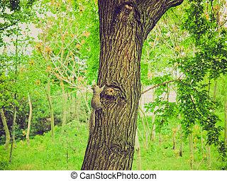 Retro look Squirrel - Vintage looking Squirrel - Animalia...