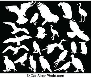 bird collection - vector - illustration of bird collection a...