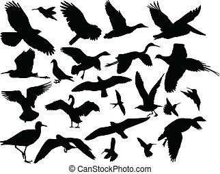 differente, vettore,  -, uccello, collezione