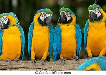 loro, pájaro