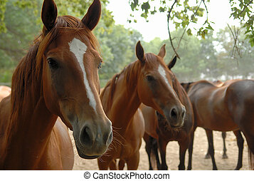 Horse Herd in the countryside of Ukraine