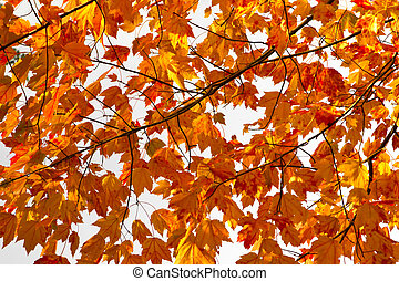 Colorful Fall Leaves Background Texture