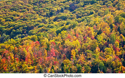 Colorful Fall Forest Trees Background Texture in New York