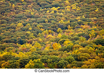 Fall Forest in New York Background Texture