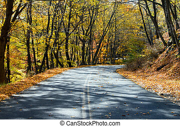 Empty Highway Through the Fall Forest - Empty road through a...