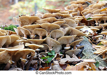 Group of mushrooms - mycology - Recording of a group of...