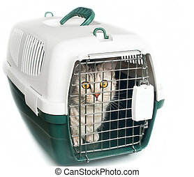 cat in cage - kitten in cage