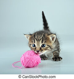 funny cute little kitten playing with a woolball - Funny...